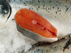 Worms In Fish Refuting Rabbi Kuber S Article Yeshiva