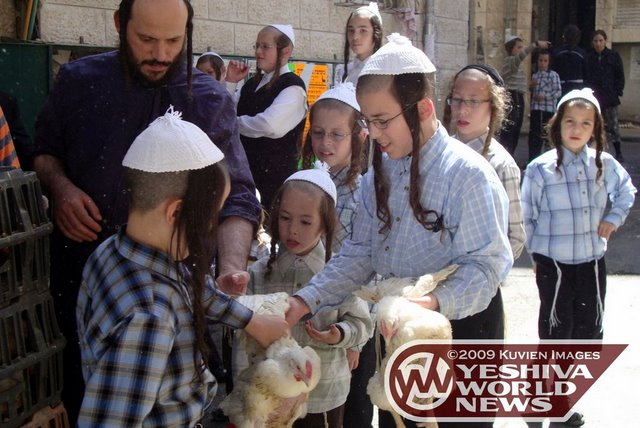 Israel: New Regulations Signal There Will be No Problem with the Minhag of Kaporos this Year
