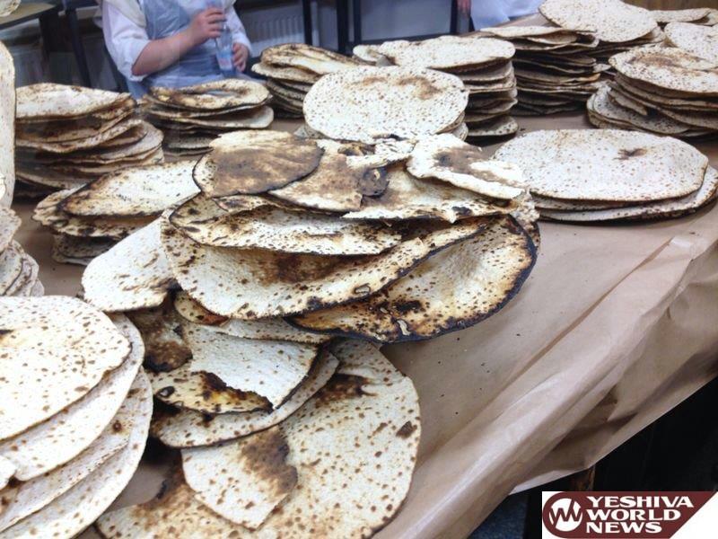 Great Efforts Being Made To Solve The Shortage of Spelt & Gluten Free Oat Matzos In Eretz Yisroel