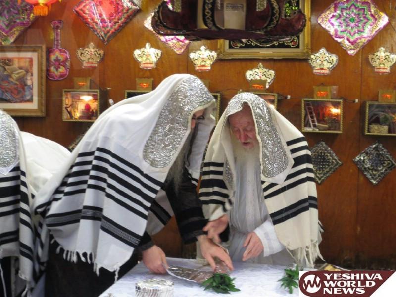 IMG_1 hoshana rabbah