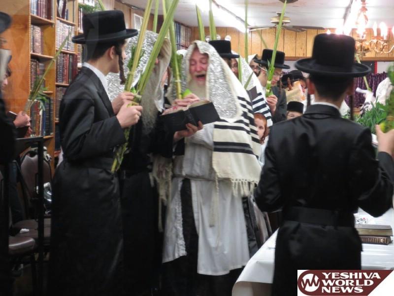 IMG_2 hoshana rabbah