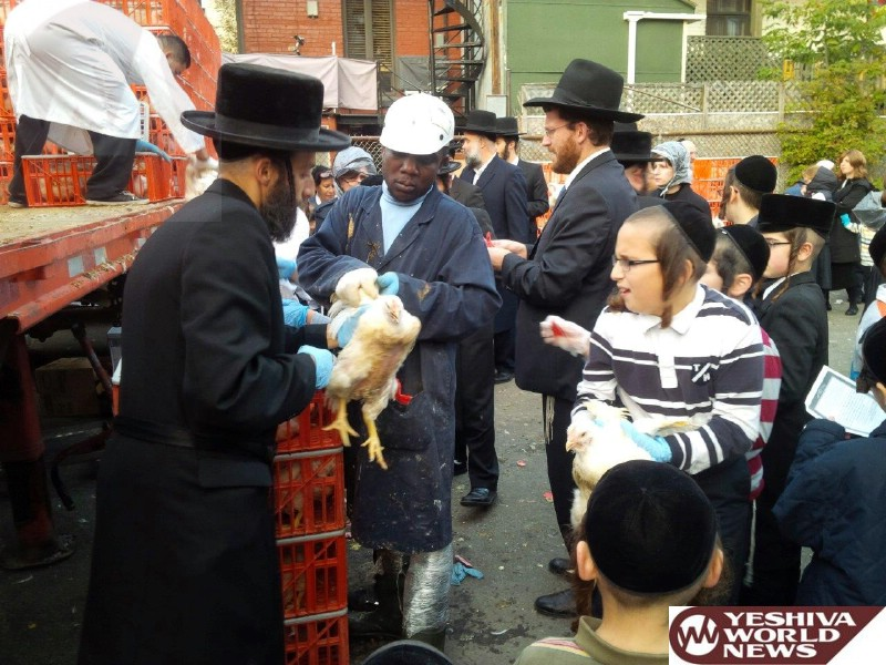 Photo Essay: Yidden In Montreal Doing Kapparos (Photos By JDN)