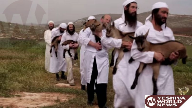 VIDEO: Korban Pesach Training by the Temple Institute
