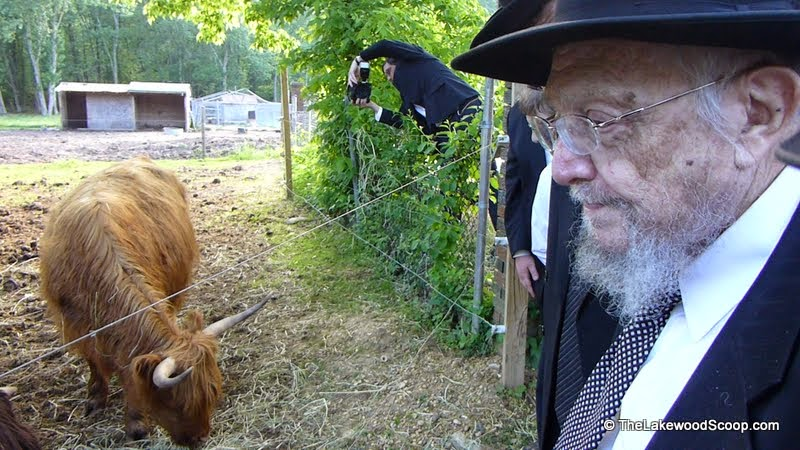 VIDEO AND PHOTOS: Hagaon Rav Dovid Feinstein Inspects Possible Parah Adumah