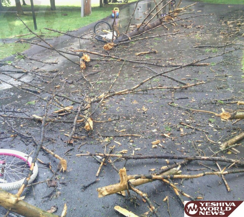 PHOTO: Tree Limb Falls - Missing Father And Child By Inches
