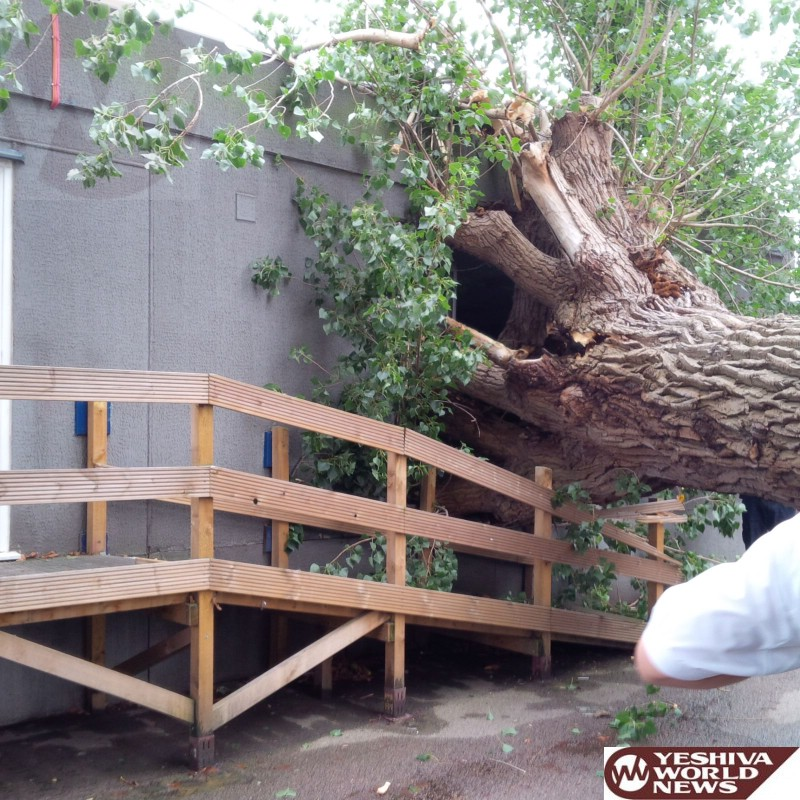 PHOTOS - MIRACLE: No One Hurt After Huge Tree Slams Into Yeshiva Yesodey Hatorah In Stamford Hill, London