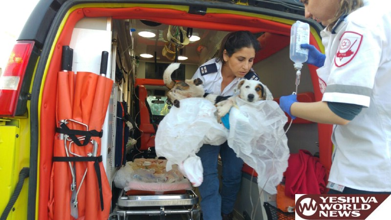 PHOTOS: MDA Paramedic Treats and Transports an Injured Dog