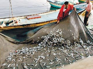 Expanded Gaza Fishing Zone Brings New Challenges To The