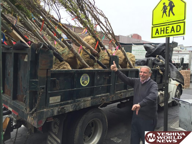 Hikind Objects to Citywide Efforts to Force Newly Planted Trees on Homeowners