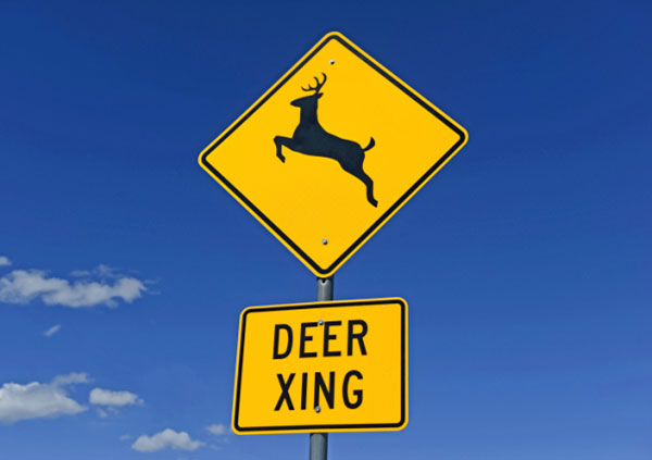 7 Ways To Avoid Hitting A Deer While Driving