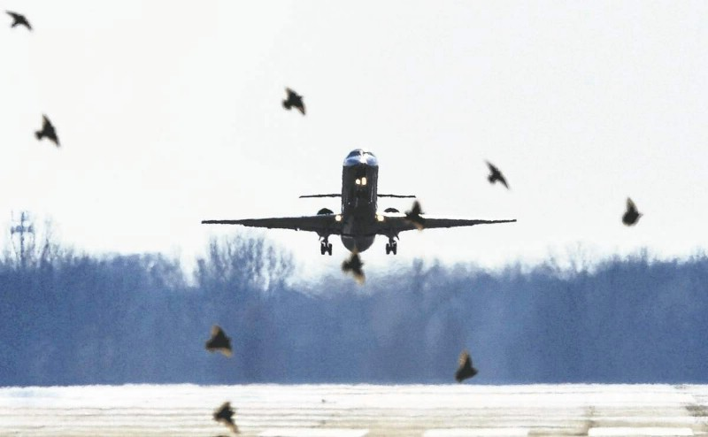 Officials: Plane Collided With Bird Before Boston Landing
