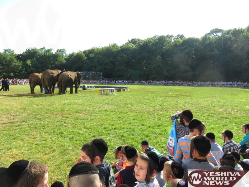 Photo Essay: Animal Show For The Day Camps In Monsey (Photos by JDN)