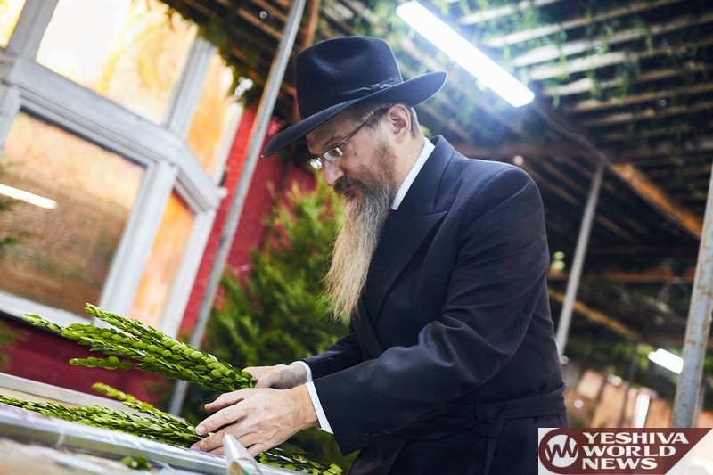 Photo Essay: Sukkos 5777 With Russian Chief Rabbi, Rabbi Berl Lazar (Photos by JDN)
