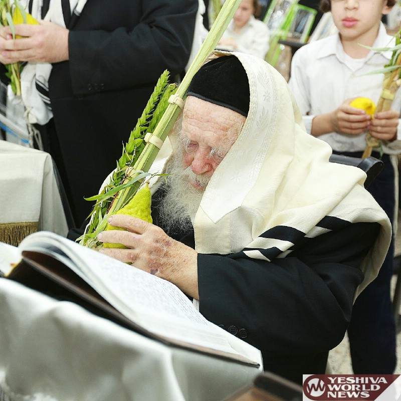 Photo Essay: HaGaon HaRav Chaim Kanievsky On Erev Shabbos Chol Hamoed Sukkos During Hallel (Photo Credit: Yossi Rosenbaum)