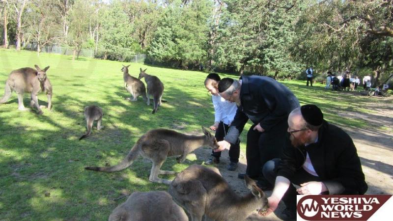 Photo Essay: Sukkos 5777 In Melbourne, Australia (Photos by JDN)
