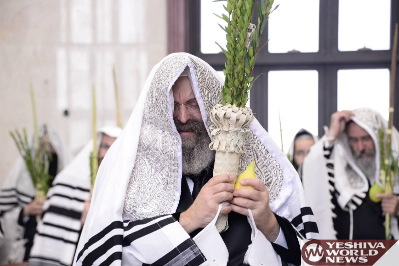 Photo Essay: Sadigura Rebbe Shaking Lulav On Sukkos 5777 (Photos by JDN)