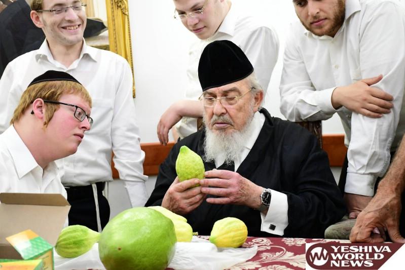 photo essay  hagaon harav boruch mordechai ezrachi checking    photo essay  hagaon harav boruch mordechai ezrachi checking esrogim  photos by jdn
