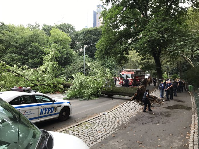 Mother and 3 kids hurt when tree falls in Central Park