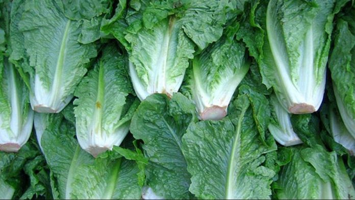 Tainted lettuce tied to nationwide E. Coli outbreak