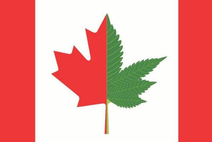 Resultado de imagen para canada marijuana